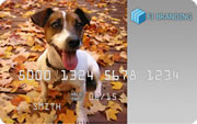 card with photo of pet - click to accept